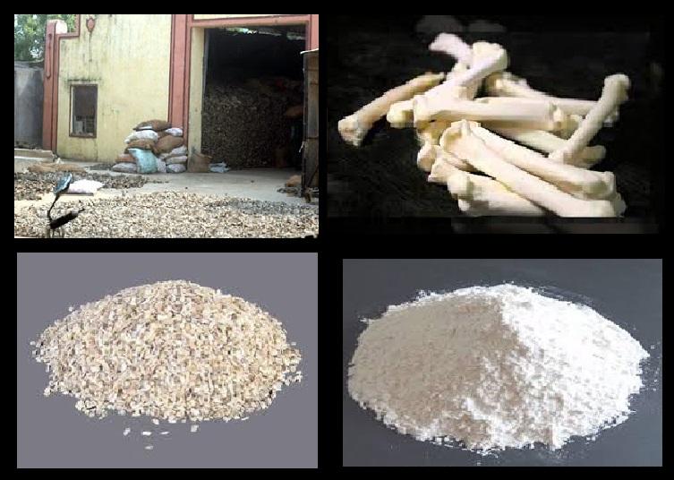 Bone export- illustrative figure